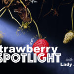 Strawberry Spotlight with Vibrissae
